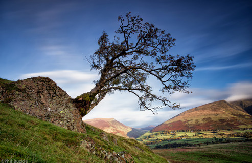 Tewet Tree