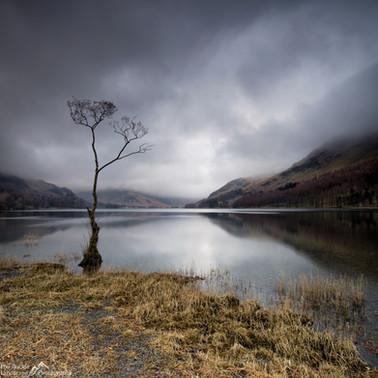 Buttermere Lone Tree.jpg