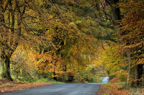 Nelson Hill Wood.jpg