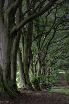 The Ridge Wood Walk.jpg