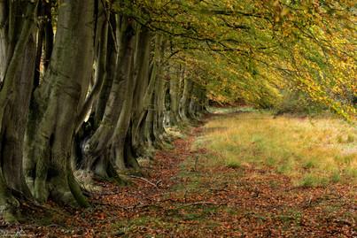 Tree Line.jpg