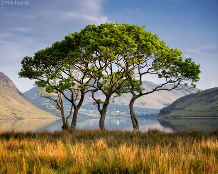Crummock Trees