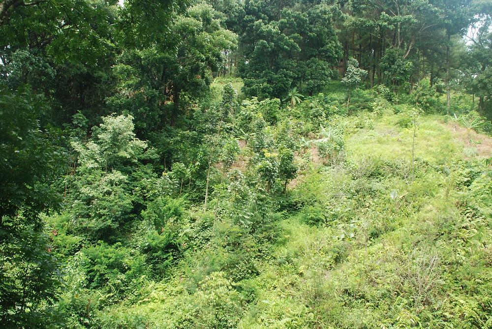 Serangga di pohon adalah sumber nutrisi walet