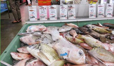 魚380220.jpg