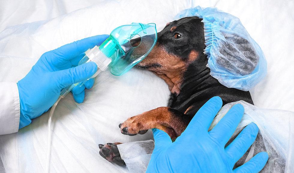 Dog Getting Oxygen.jpg
