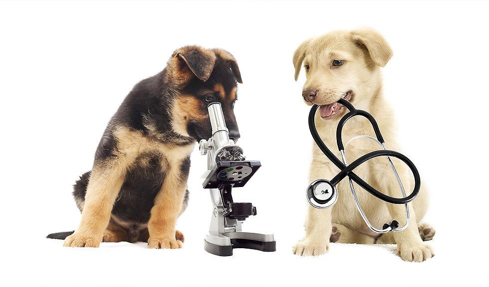 Dog with Microscope Plus.jpg