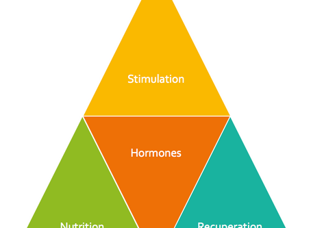 Physique and figure transformation - Holistic success pyramid