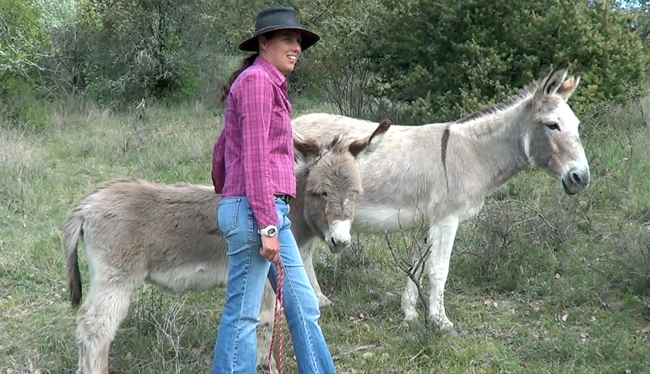 Donkey whispering
