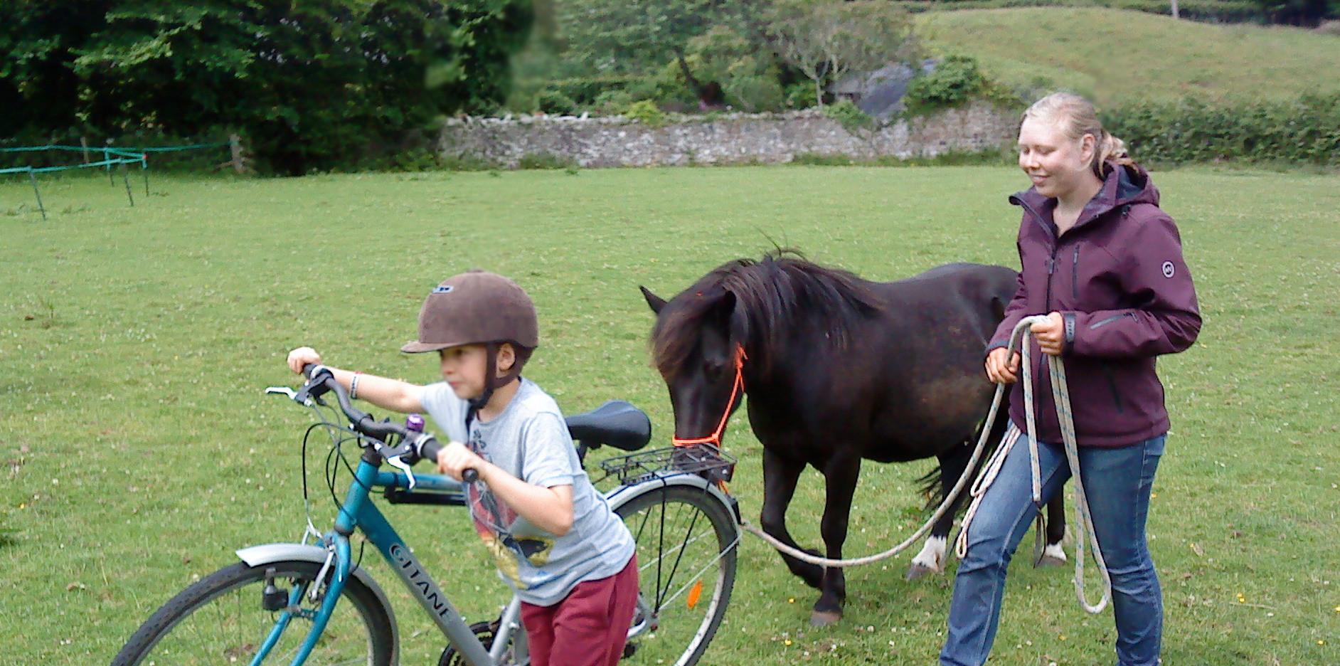 Wild pony training