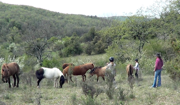 Horse whispering course
