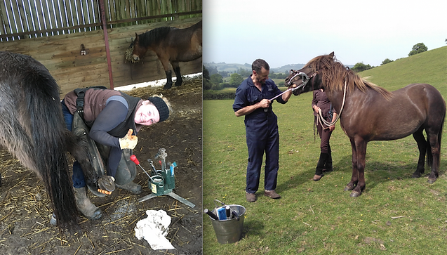Equine Care.png