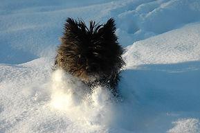 Tagada_dans_la_neige_!_(Xénie_-_Mars_200