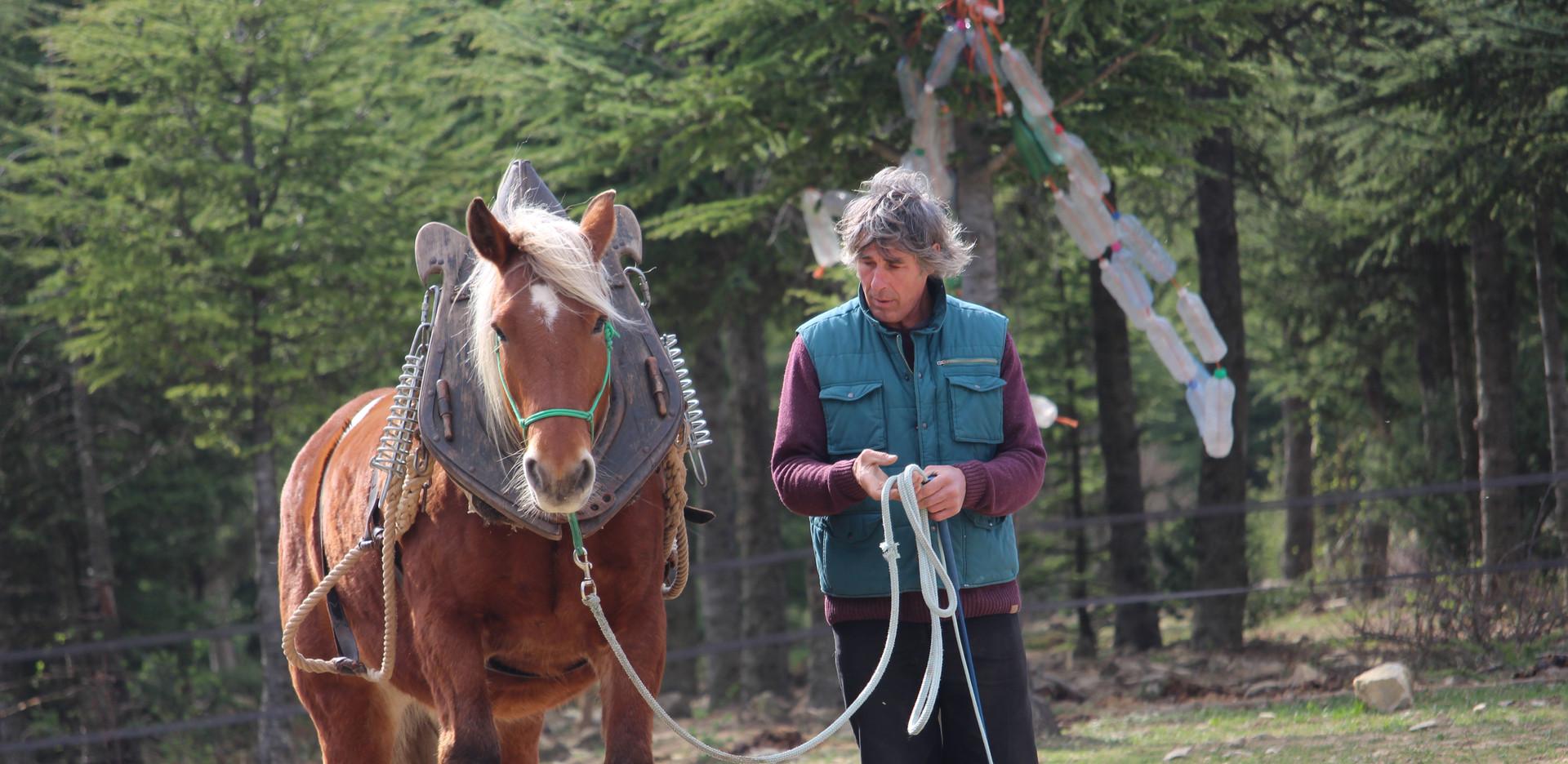 Cheval Partenaire – éthologie chevaux de travail
