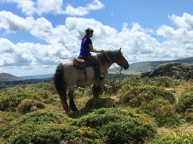 Holistic Horsemanship