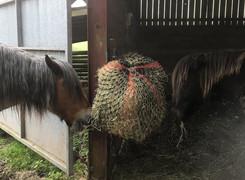 Sharing a haynet