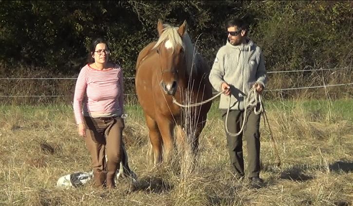 Cheval Partenaire – éthologie chevaux de trait