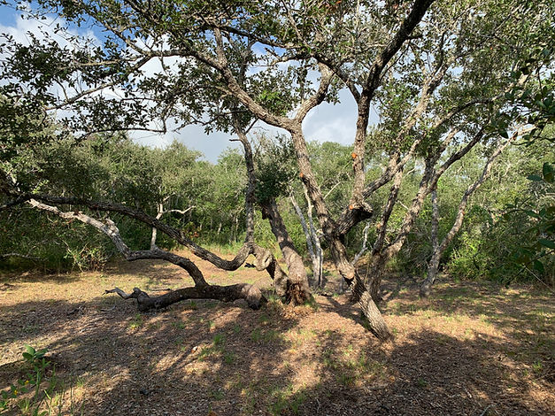 Live Oak, Aransas County, TX