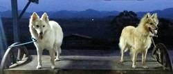 Bel e Marfim