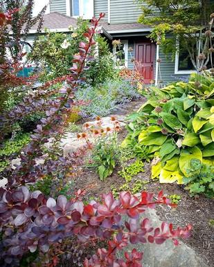 Colorful summer garden