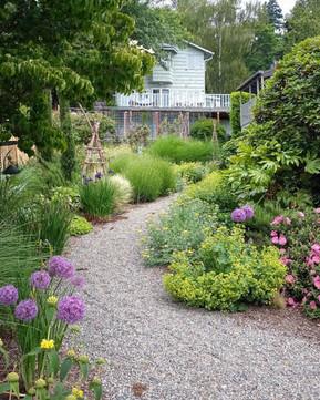 Alliums, pathway