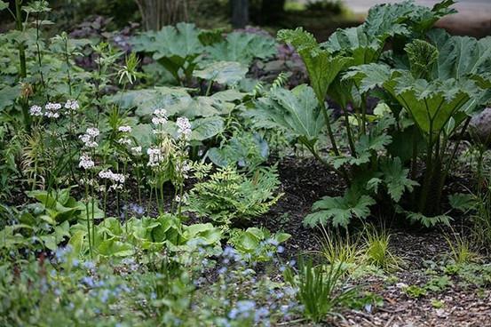 Rain gardens in the nursery