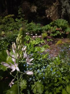 Rainy Day Flora Demonstration Garden