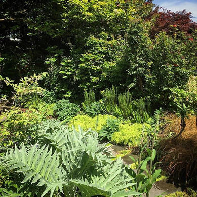 Early spring perennials