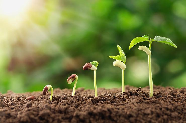 Bệnh do đất mà ra, muốn trị bệnh cây trồng phải trị bệnh cho đất trước