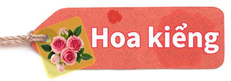 hoa-kieng-2.jpg