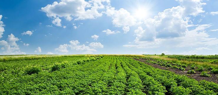 Sômin phòng trị bệnh cây trồng, cải tạo đất, tăng năng suât