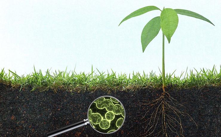 Đất luôn có vi sinh vật có lợi và có hại, cây bệnh hay không phụ thuộc vào sự cân bằng giữa chúng