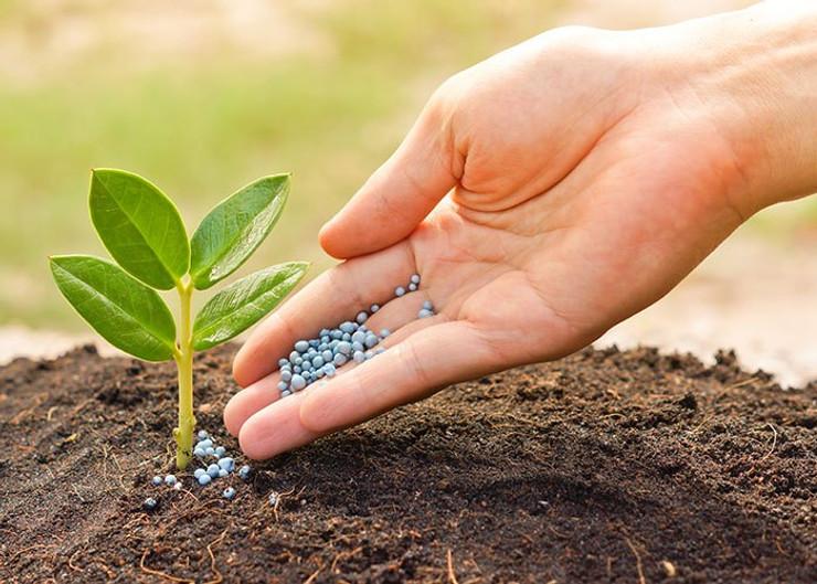 Lạm dụng phân hóa học, không cải tạo đất làm nhiễm độc đất