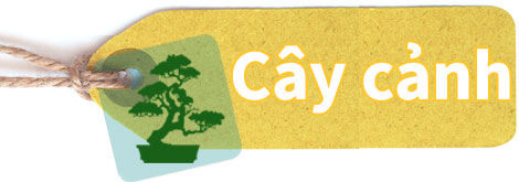 cay-canh.jpg