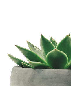 plant-2004483.jpg