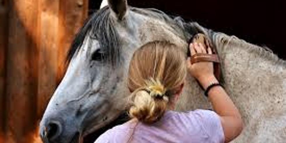 Own a pony day 19th Feb