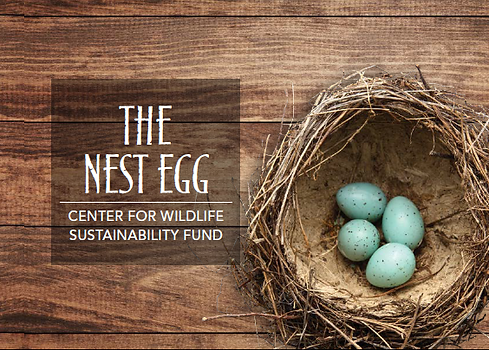 Nest Egg Cover.png