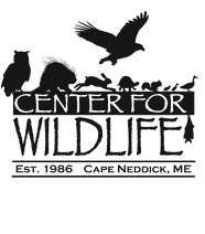 2015 CFW LOGO png_edited.png