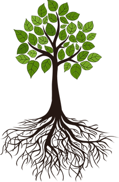 transparent-tree-with-roots-clipart-7.pn