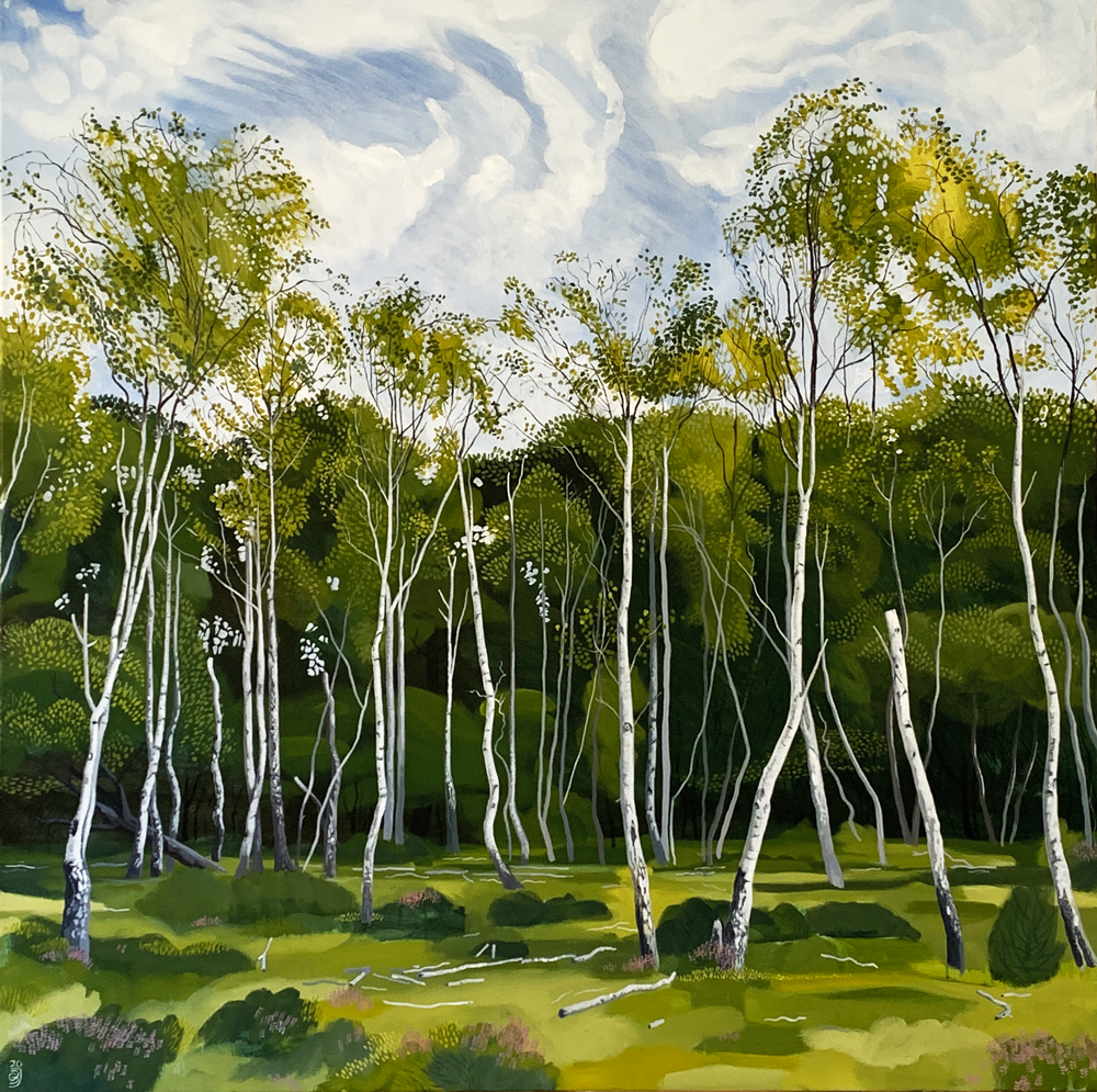 Silver Birch, Pioneer trees, New Forest 2020
