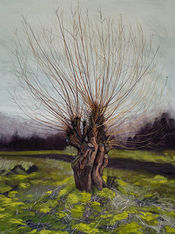 Pollarded willow, Walthamstow marshes 2021