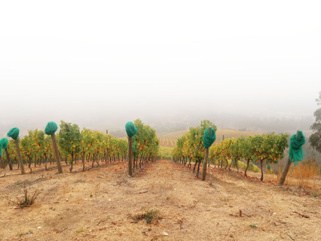 Lo Abarca: The terroir of cool climate fine wines in Chile