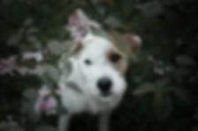 Glowdogs_hundfotograf_Boden_8.jpg
