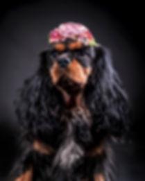 Jennie_Carnudd_glowdogs_hundfotograf_nor