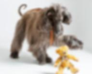 Glowdogs_hundfotograf_Boden Boden 11.jpg