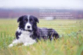 Glowdogs_hundfoto_ Boden.jpg