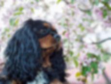 Glowdogs_hundfotograf_norrbotten.jpg