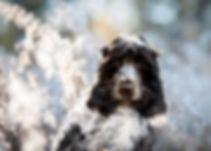 Glowdogs jennie carnudd.jpg