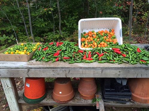 Peppers & Garlic, Seasonal-Price TBD