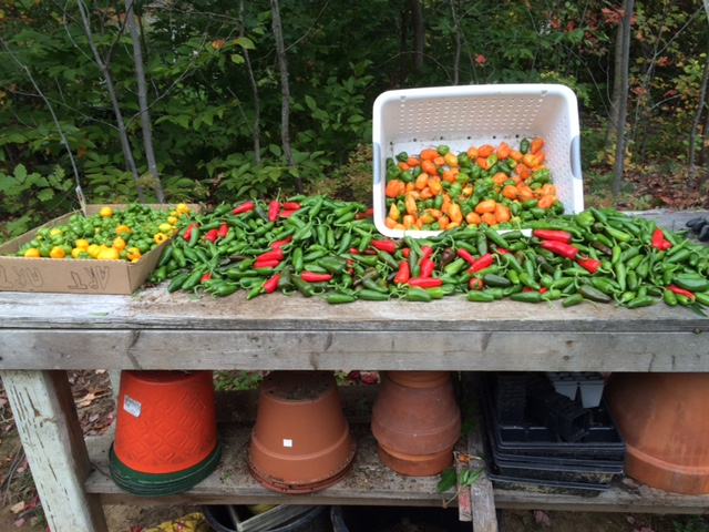 Yup, we have peppers.