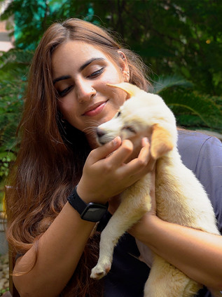 Running an International Dog Shelter to Rescue Stray Dogs